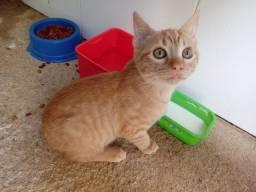 Lindo gatinho para doaçao!