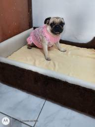 Vendo linda Pug