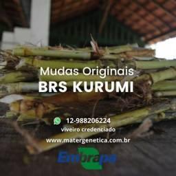 Título do anúncio: BRS KURUMI