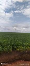 Fazenda Palmas-TO