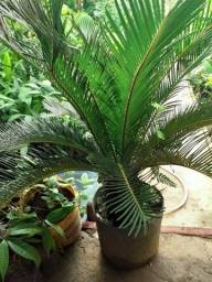 Plantas onrnamentais diversas
