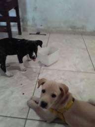 Estou doando esse cachorro de cor clara, quem se interessar mim liga ou zap