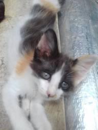 Doa-se gatinhos filhotes para adoção responsável