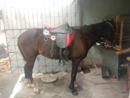 Vendo cavalo selado do jeito q ta na foto