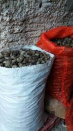 Vende se 60 quilos de castanhas de caju com casca