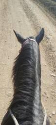 Cavalo quarto de milha  cm documento fez 5 anos mês passado