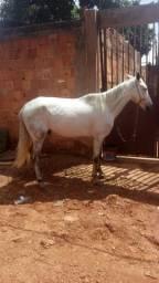 Cavalo 5 ano