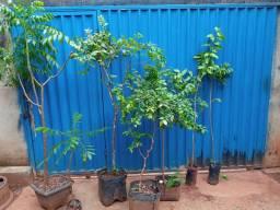 Plantas e mudas variadas