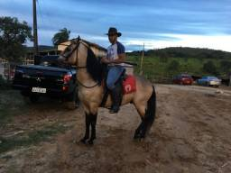cavalo baio inteiro mangalarga machador registrado = valor 12,000