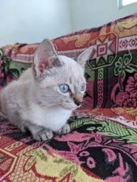 Gatos para doação.