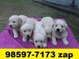 Canil Filhotes Pet BH Cães Golden Akita Pastor Boxer Labrador Rottweiler