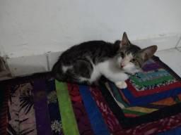Doação de gato