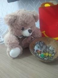 Miniatura de Hamster's - Sírio / Chinês