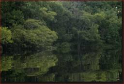 Floresta - Amazônia 970.000 ha