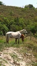 Égua e potra top