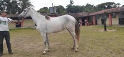 Vendo 2 Éguas Mangalarga Machador registrada 22.000 R$