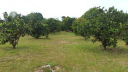 Lindo Sítio no Rio Preto / Aceito Proposta Descente