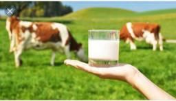 Vendo 2 vacas de leite