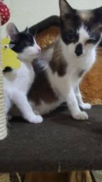 Lindas gatinhas para adoção