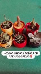 Plantas??