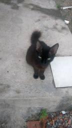 Estou doando gatinhos!!