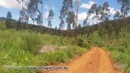 Plantação de eucalipto 4000 pés com 7 anos