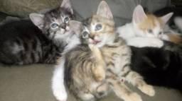 doação de gatos.