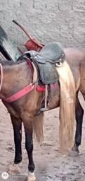 Cavalo vendo ou troco