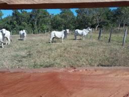 .  Fazenda 126 Alqueires e lagoa do Tocantins
