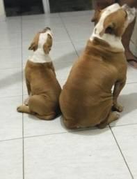 Filhote e mãe
