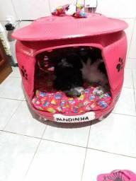 Casinha pra cachorinhos