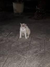 Doação de Gato, gatinhos