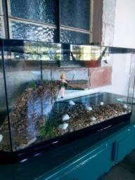 Vende-se aquário de canto para tartaruga 290.00