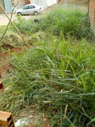 Limpeza de terreno e remoção