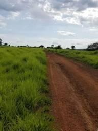 Oportunidade - Fazendas no Mato Grosso do Sul