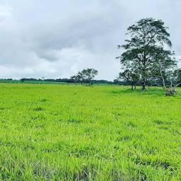 Fazenda Extra   39.5 Alqueires   120 km Goiânia