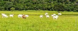 Fazenda cinematográfica para gado, Unaí.