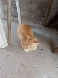 Este gato e pra doação