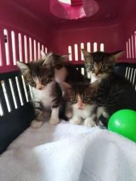 Gatos filhotes disponíveis para adoção