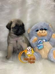 Filhotinhos de Pug