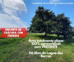 Chácara totalmente plana, com Figueira e Vertente. 6km da Lagoa dos Barros.