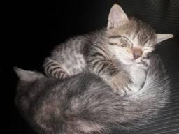 Adoção responsável de gatinhos filhotes