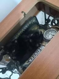 Gatinhos pra adoção, entrego vermifugado!