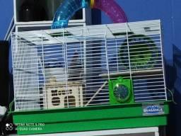 Gaiola com os dois ratos twister e tudo pronto para você