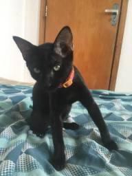 Doa-se gato fêmea vermifugada