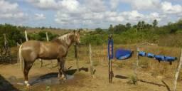 Vende-se um cavalo de esteira