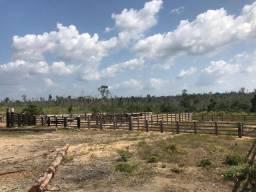 Fazenda à venda no município de Anapu, Pará com 781 alqueires