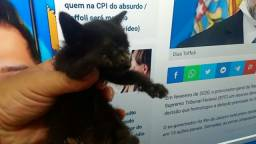 Gatinho (a) filhote doa-se