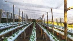 Lana plástica / filme agrícola p estufa