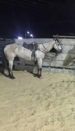 Cavalo quarto de milha de esteira